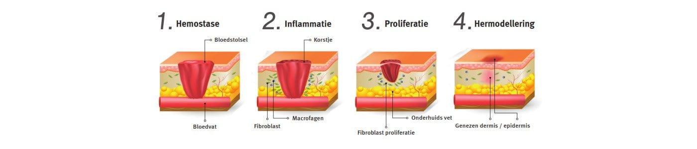 de helings fasen van een litteken